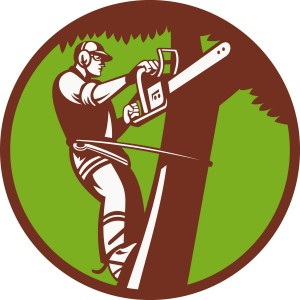 arborist-tree-surgeon-trimmer-pruner_zkaUXDIu_L